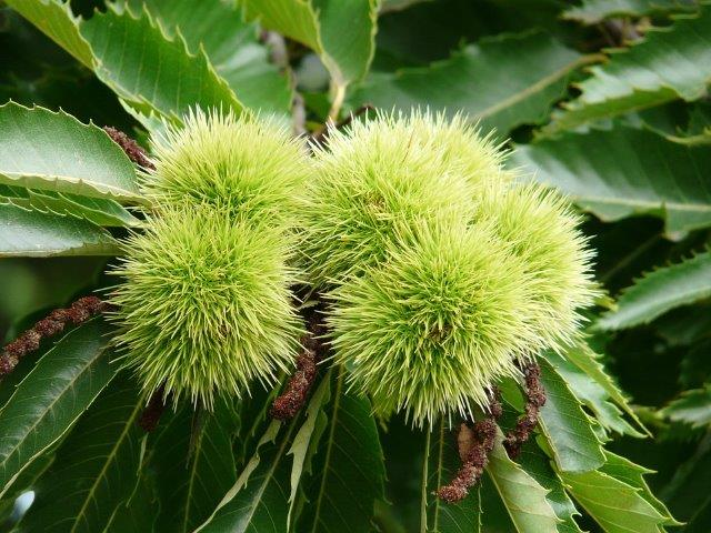 Chestnuts with Nuts